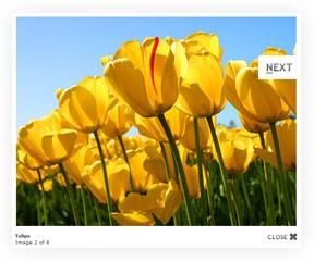Vinewave Picture Gallery web part slideshow image